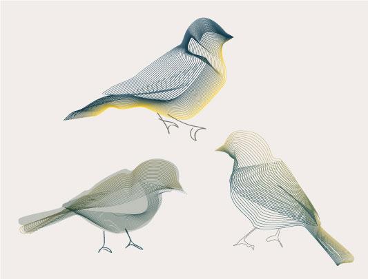 3-little-birds